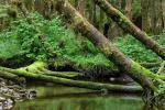 RAIN FOREST-1