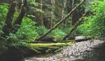 RAIN FOREST-2