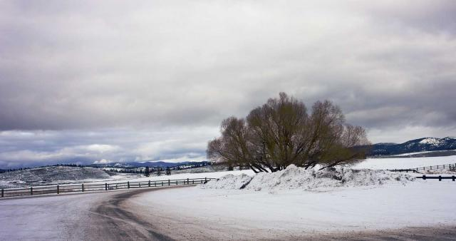 OAK TREE-WINTER-MONTANA